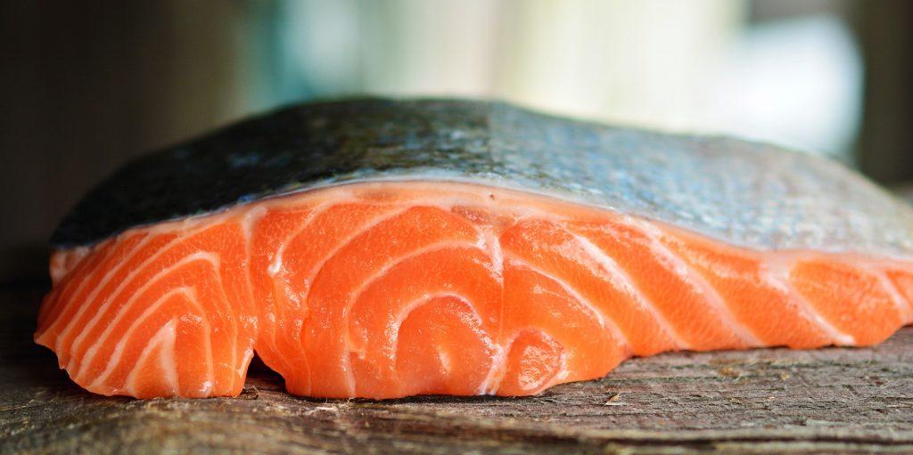 ilustrasi gambar ikan salmon